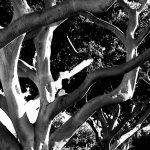 black-and-white-3.jpg
